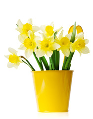 Daffodils in a yellow flowerpot