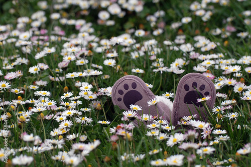 Little shoes on flowery meadow