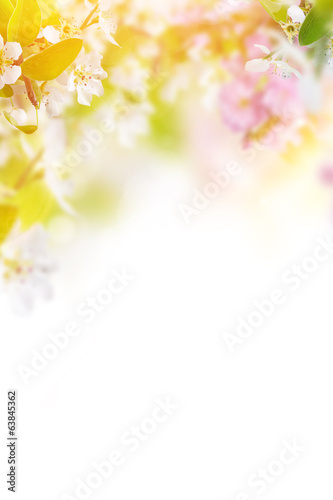 Tuinposter Bloemenwinkel Spring blossoms background