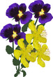 group of buttercup and garden violet flowers on white
