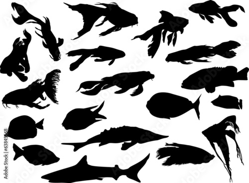 nineteen fishes collection isolated on white