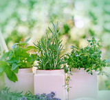 Fresh herbs - spices