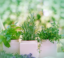 Fresh herbs - spices