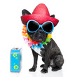 holiday summer dog