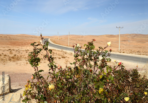 Rose in the desert. Jordan