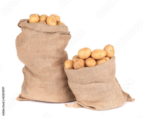 Ripe potatoes in burlap sacks.