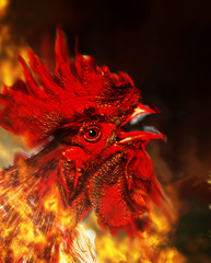 Red Rooster of fire. Symbol of fire.