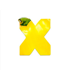 fruits and vegetables - letter X