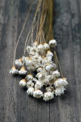 dried wild daisies