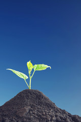 Little green sprout grows up against blue sky