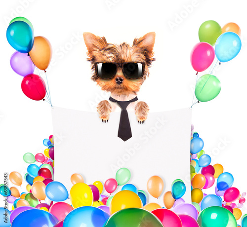 dog with Holiday banner and colorful balloons