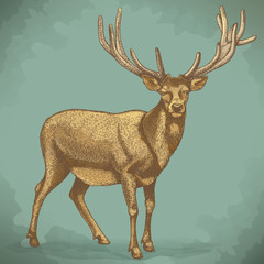 vector engraving of reindeer retro style