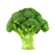 Fresh green broccoli, vector illustration