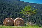 Bosque en Soldeu (Andorra)