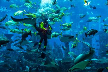 Huge aquarium in Dubai. Diver feeding fishes.