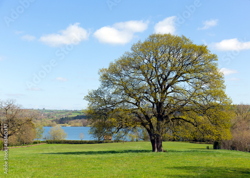 Country scene Blagdon Lake Somerset Somerset England UK
