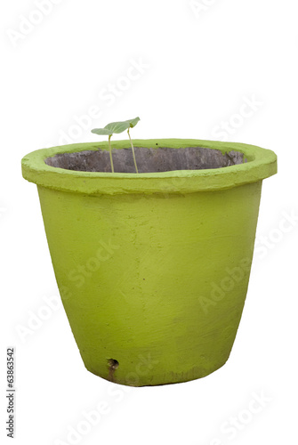 sprouts in green colored pot