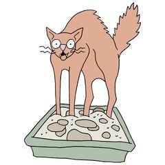 Dirty Cat Litter Box