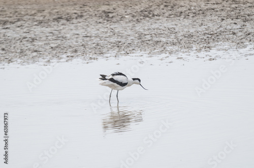 Avocet series 01