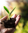 exclusive - agriculture concept , small plant in hand - 63868197