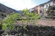 Huerto con higuera, Fragosa, Hurdes, España