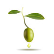 Vector(eps 10) Olive with leaves and drop