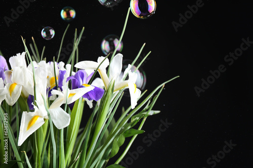 Beautiful irises on black background