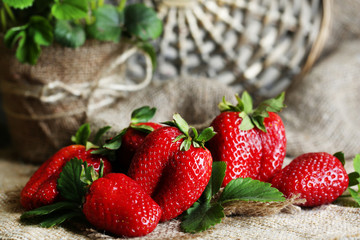 Strawberries with leaves on  on sackcloth background