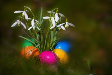 Fünf Eier im Morgennebel