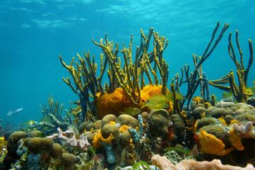 Underwater scenery colorful marine life coral reef