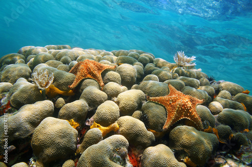 Underwater coral starfish and water surface