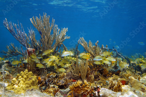 Underwater landscape in a coral reef with fish