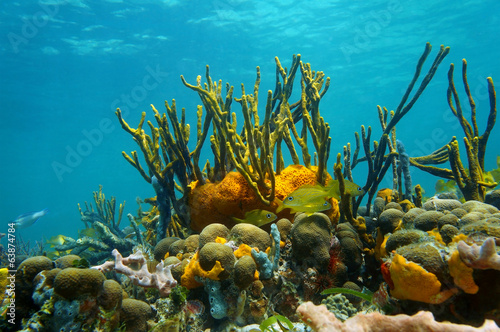 Fotobehang Koraalriffen Underwater scenery colorful marine life coral reef