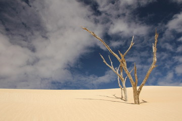 A desert far away