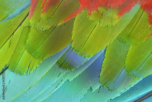 close up of scarlet macaw wing