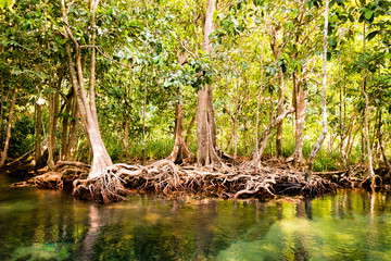Khlong Song Nam clear tropical stream, Krabi, Thailand