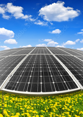 Solar energy panels on dandelion field