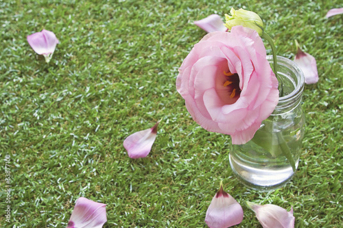 Vintage rose in jar on grass