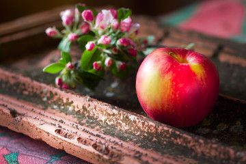 blooming sprig of apple and apple