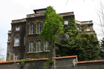 Old  Mansion Covered up Ivies