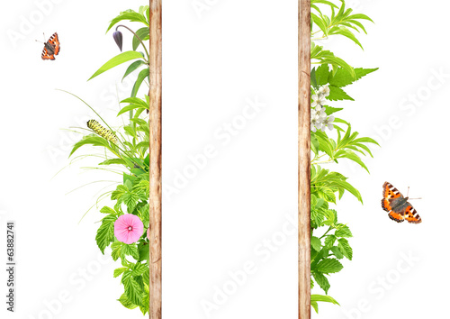 Summer frame with green leaves, flowers and insects