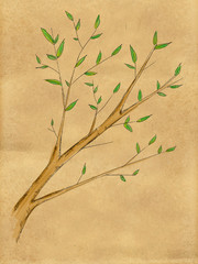 Branch Plant water color on Paper