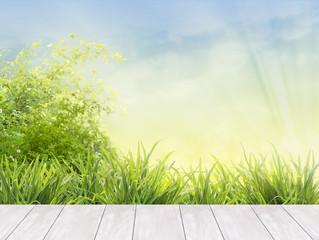 wooden boards terrace in garden with grass, blue sky, sunlight