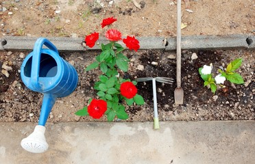 Small flower garden at home with gardening tools