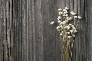 dried wild daisies on an old wooden background