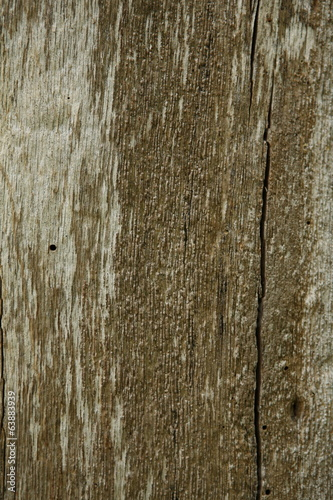 Texture of oak bark