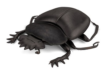 realistic 3d render of scarabeus