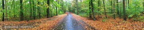 canvas print picture Panorama von Wald im Herbst