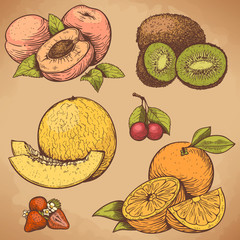 vector engraving fruits and berries