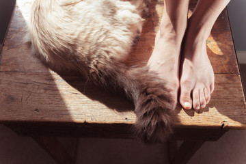 Woman's feet and cat